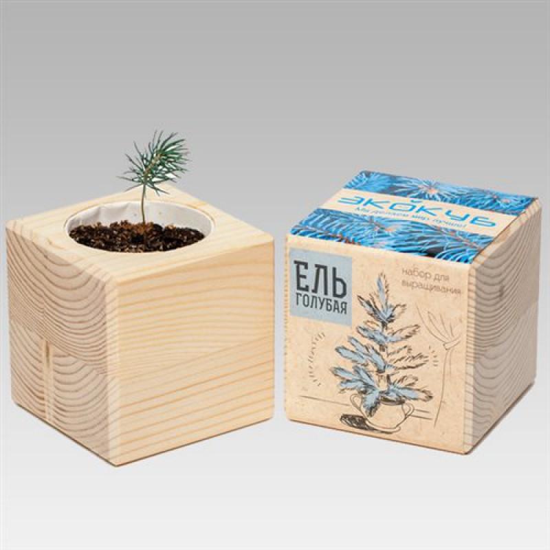 """Экокуб """"Голубая ель"""" (набор для выращивания)"""