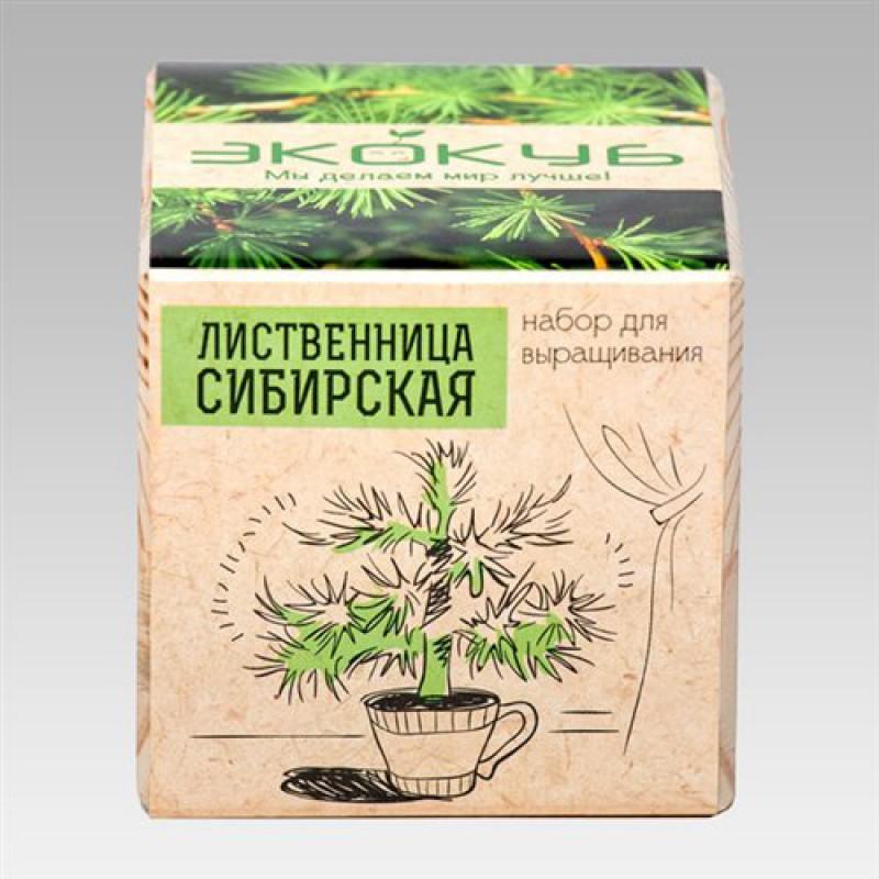 """Экокуб """"Лиственница Сибирская"""" (набор для выращивания)"""