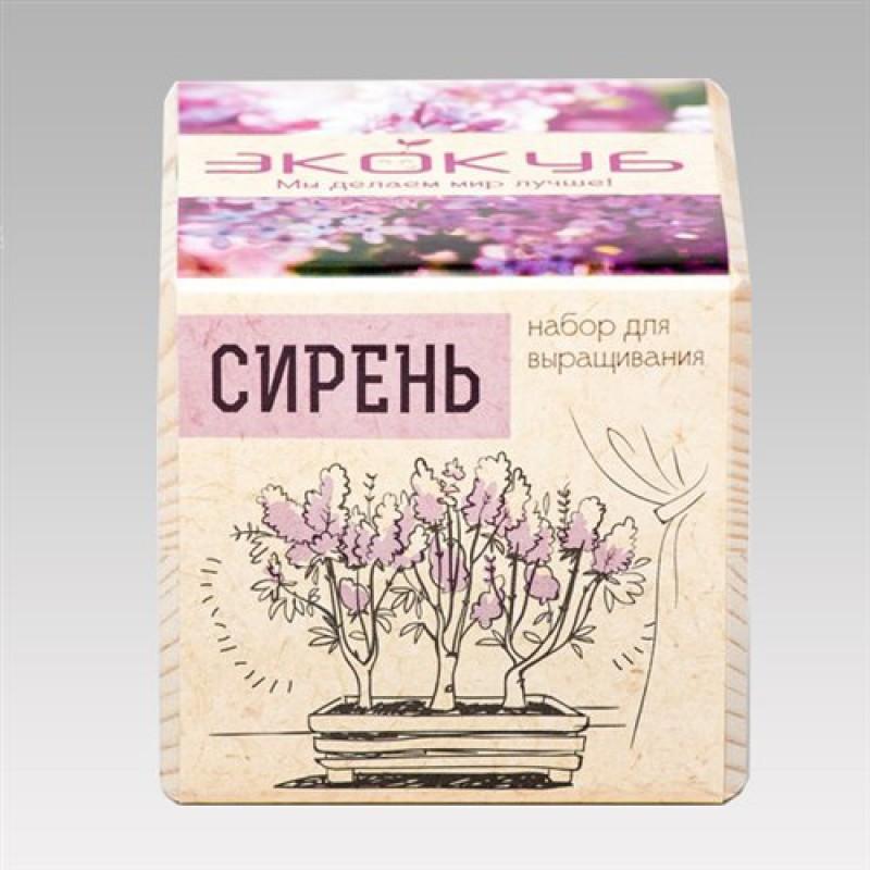 """Экокуб """"Сирень"""" (набор для выращивания)"""